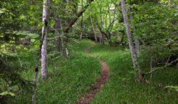 Forest Trail, Borjomi, Georgia