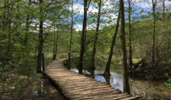 Upper Lakes Boardwalk, Plitvice Lakes, Croatia