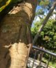 Lizard on Penang Hill