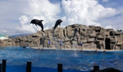 Jumping Dolphins, Batumi, Georgia