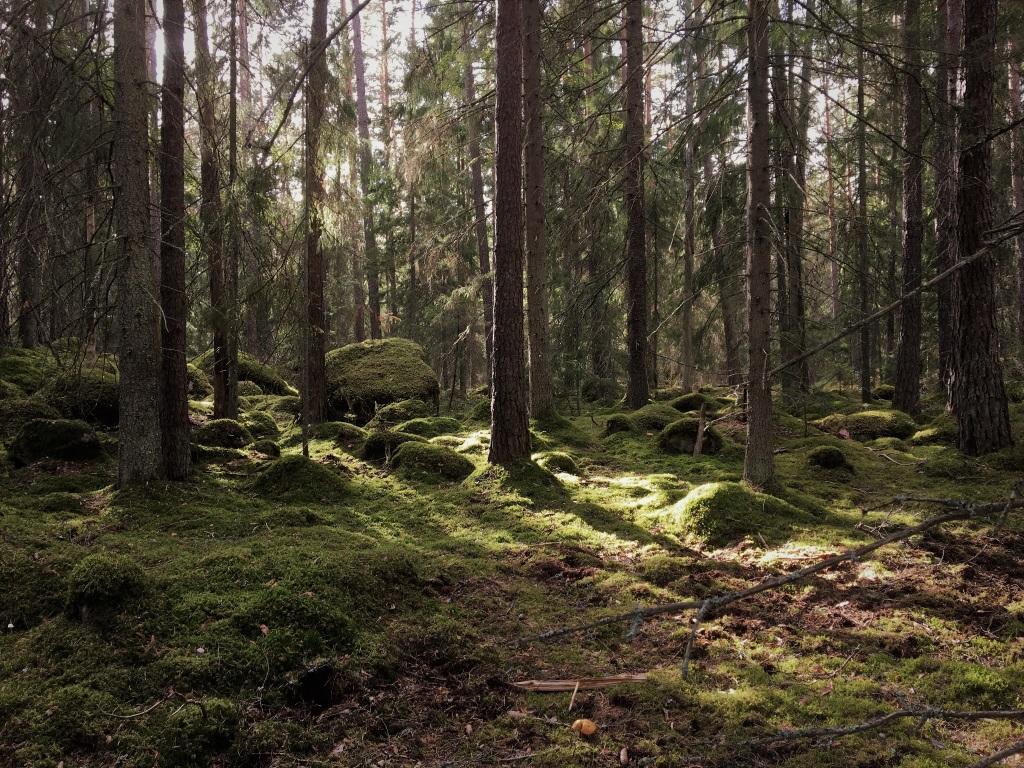 Skiren-Kvicken Nature Reserve, Eskilstuna, Sweden