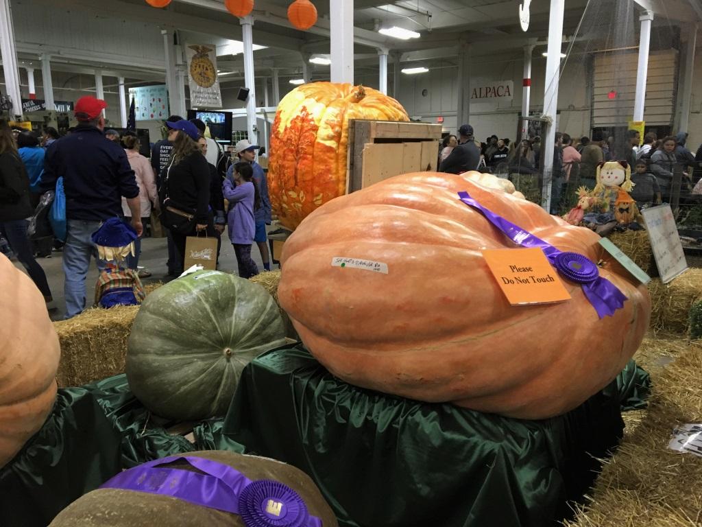 Giant Pumpkins at the Big E, Springfield, Mass.